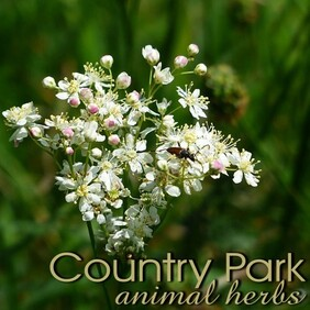 Country Park Meadowsweet 1kg