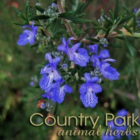 Country Park Rosemary 1kg